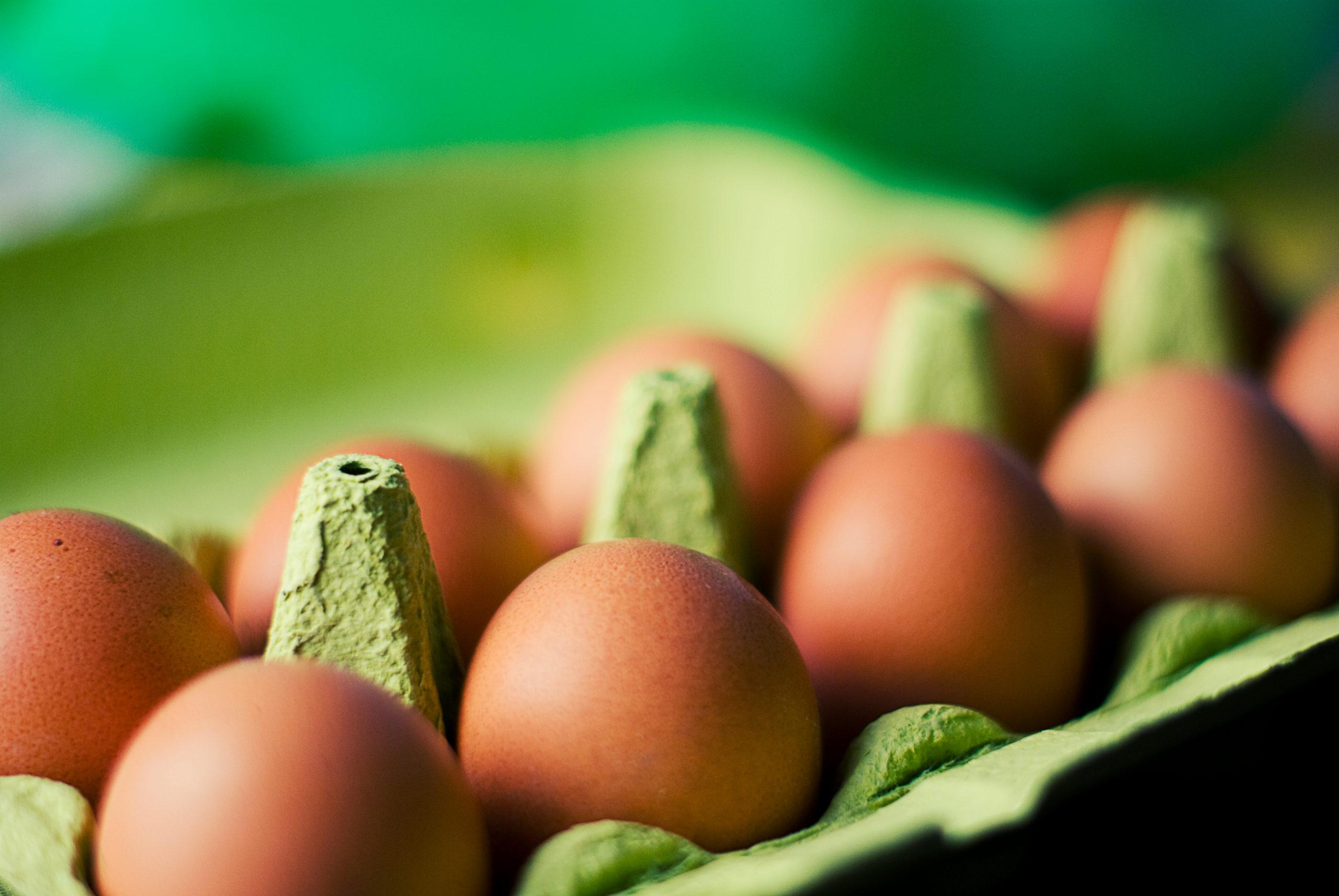 eggs in an open carton